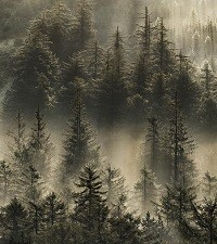 Sometimes We Can't See the Trees for the Forest - Infamous Words of Bill Windsor